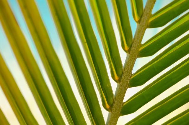 list palmy.jpg